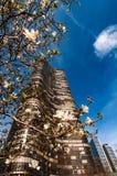 构筑一个参天的摩天大楼的白色春天开花在芝加哥 库存照片