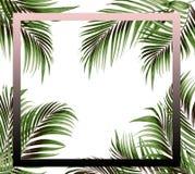 构筑与棕榈树背景绿色叶子的图片  库存图片