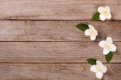 构筑在老木背景的茉莉花花与您的文本的拷贝空间 顶视图 背景看板卡图画邀请向量婚礼白色 库存图片