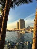 构筑城市地平线和小船小游艇船坞,圣地亚哥,加利福尼亚,美国的棕榈树 库存图片