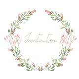 构筑嫩桃红色花边界、与在白色背景的水彩绘的绿色叶子的花圈和分支