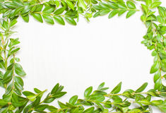 构筑绿色叶子,植物 在视图之上 库存照片