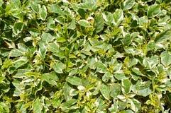 构造一朵异乎寻常的花的一棵自然植物的绿色叶子,绿色自然自然地毯,在太阳下的绿叶,热带草, 库存照片