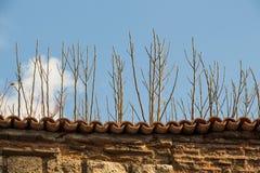 构造秋天季节背景与它的元素的 库存照片