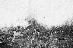 构造老真菌墙壁的背景,黑白 免版税图库摄影