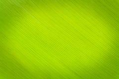 构造背后照明新鲜的绿色叶子背景。 免版税库存图片
