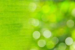 构造背后照明新鲜的绿色叶子和抽象b背景  库存图片