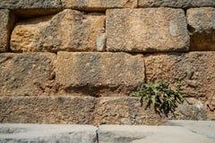 构造被风化的老自然石砖墙背景以与联接、毛面和绿色植物的黄色 库存照片