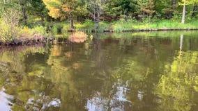 林业五颜六色的看法被反射在齐佩瓦人Flowage供水系统的表面上在海达德northwoods,WI的 股票视频