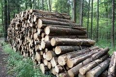 林业在Bialowieza波兰 免版税图库摄影
