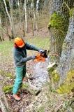 林业实践 图库摄影