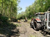 林业工作 库存照片