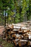 林业 免版税库存照片