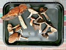 林产品蘑菇在收获以后 库存图片