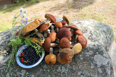 林产品:蘑菇和莓果 库存图片