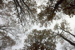林冠层抽象看法在有薄雾的早晨 库存照片