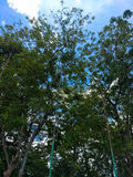 林冠层 图库摄影