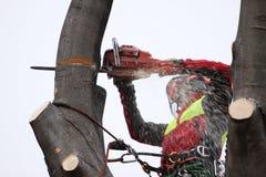 林务员在工作 免版税库存照片