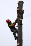 林务员在工作 免版税库存图片