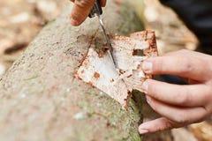 林务员树的裁减吠声对测试的 库存图片