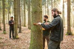 林务员测量树干直径  图库摄影