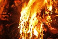 林区大火关闭 免版税库存图片