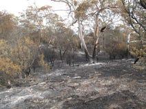 林区大火后果 库存照片