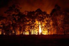 林区大火澳大利亚4 免版税图库摄影