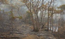 林区大火-储蓄图象 免版税库存图片