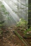 林恩与太阳光芒的峰顶足迹 库存照片