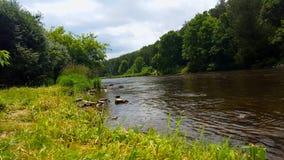 林木包围的美丽的流动的河在夏天 从树被排行的河岸的观点在森林地里面 影视素材