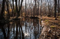林木和流动的淡水在日落时间 阿塞拜疆 库存图片