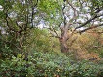 林木在秋天光的道路场面留下树干 免版税图库摄影
