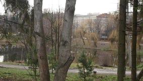 林木在秋天公园 股票视频