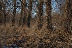 林木背景 免版税库存图片