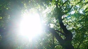 林木自然太阳 股票视频