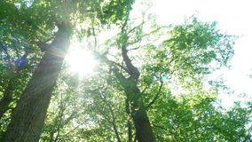 林木自然太阳 影视素材