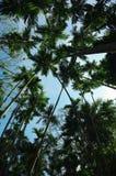 林木绿色木头在蓝天下 库存图片