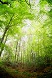 林木 免版税图库摄影