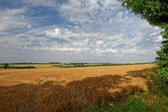 林肯郡黄木樨草农田,英国 免版税库存照片