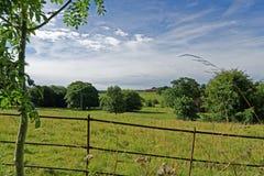 林肯郡黄木樨草,英国 免版税库存图片