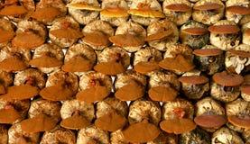 林芝蘑菇在蘑菇农场 库存图片