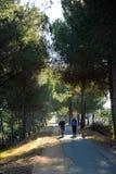林荫道路Los莫利诺斯del Agua在瓦尔韦德del Camino,韦尔瓦省,西班牙省  免版税库存图片