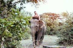 素林,泰国- 11月19,2016;洗浴与的大象 库存照片