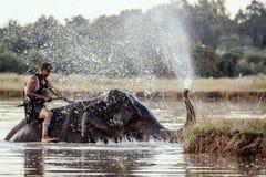 素林,泰国- 11月19,2016;洗浴与的大象 免版税图库摄影