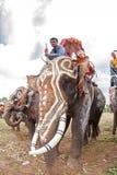 素林,泰国- 5月16 :在大象的后面F的整理游行 库存照片