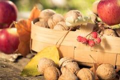 水果和蔬菜在秋天 免版税库存图片