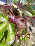 果子、叶子和庭院 库存照片