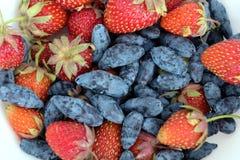 果子分类了盛肉盘用全部成熟开胃草莓,并且忍冬属植物隔绝了ob白色背景演播室射击关闭  免版税图库摄影
