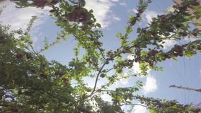 果子发光与太阳的光芒反对天空 影视素材
